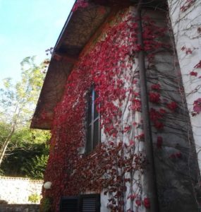 castellamonte - edificio con umidità di risalita